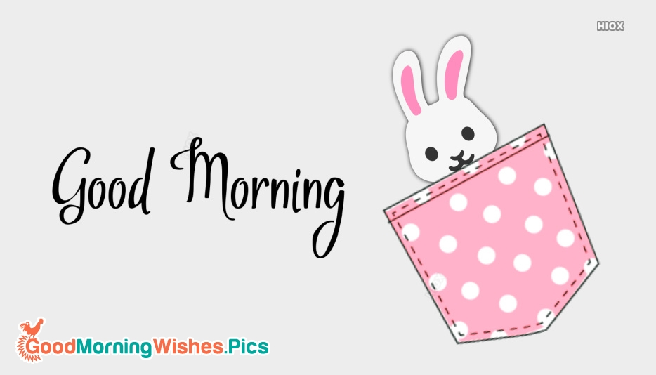 Good Morning Images With Rabbit