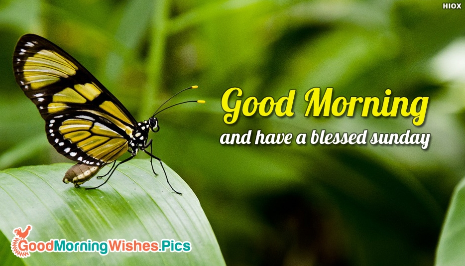 Good Morning and Have A Blessed Sunday - Good Morning Images for Sunday