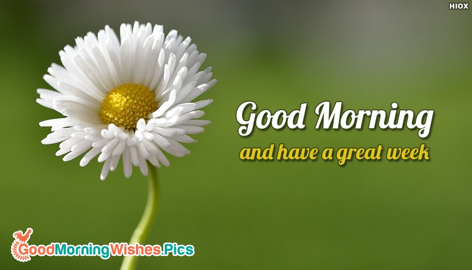 Good Morning Everyone In Email : Good morning and have a great week goodmorningwishes pics