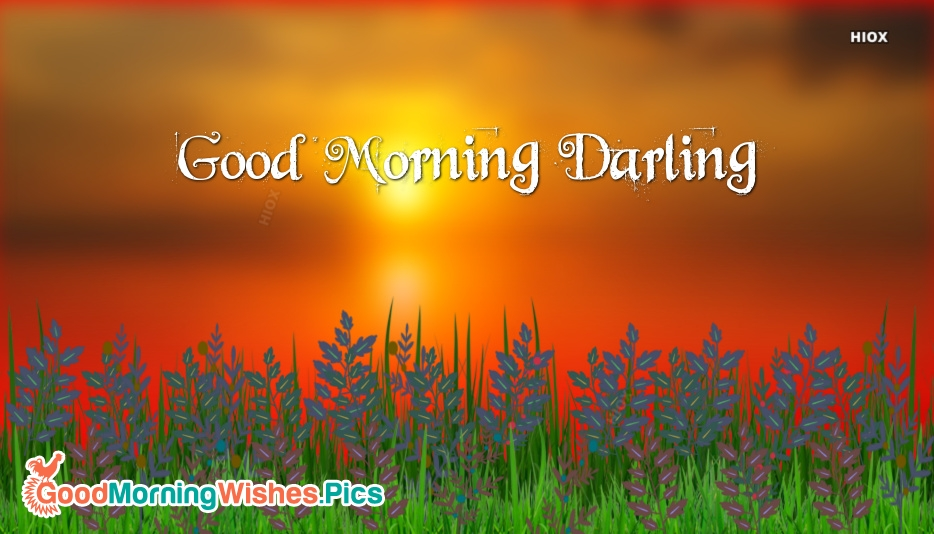 Good Morning Darling Hd Wallpapers