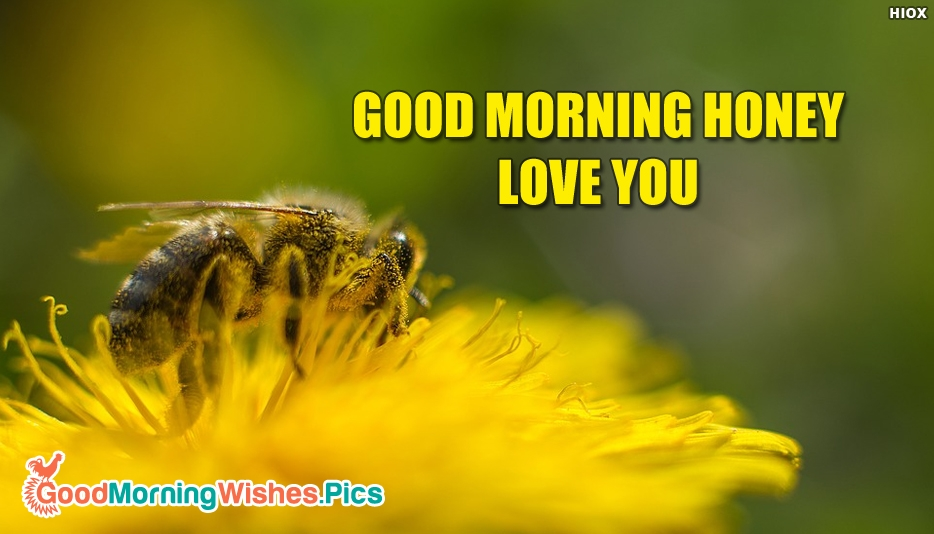 Good Morning Honey Love You - Good Morning Images for Love
