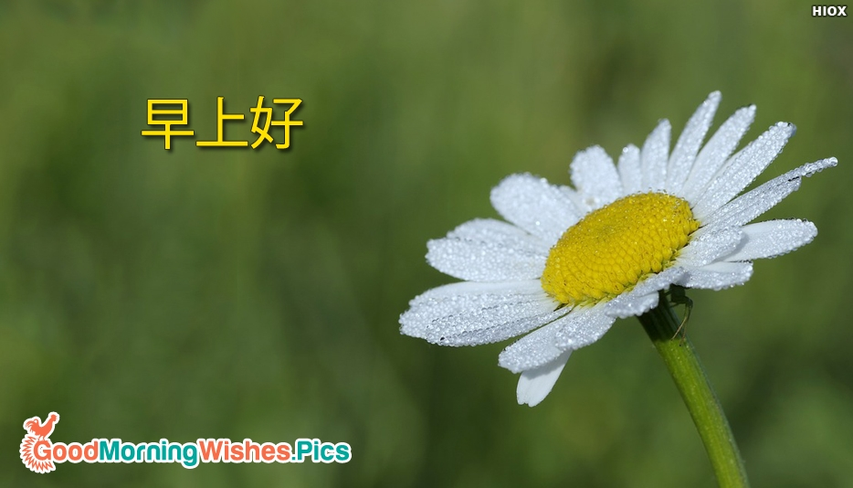 Good Morning In Chinese Fukien : Good morning image in chinese impremedia