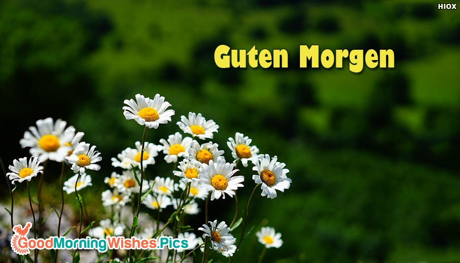 Good Morning Lady German : Good morning in german images greetings pics