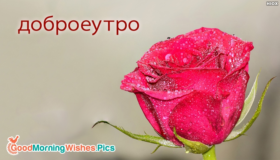 Good Morning My Dear In Korean Language : Good morning in russian Доброе goodmorningwishes pics