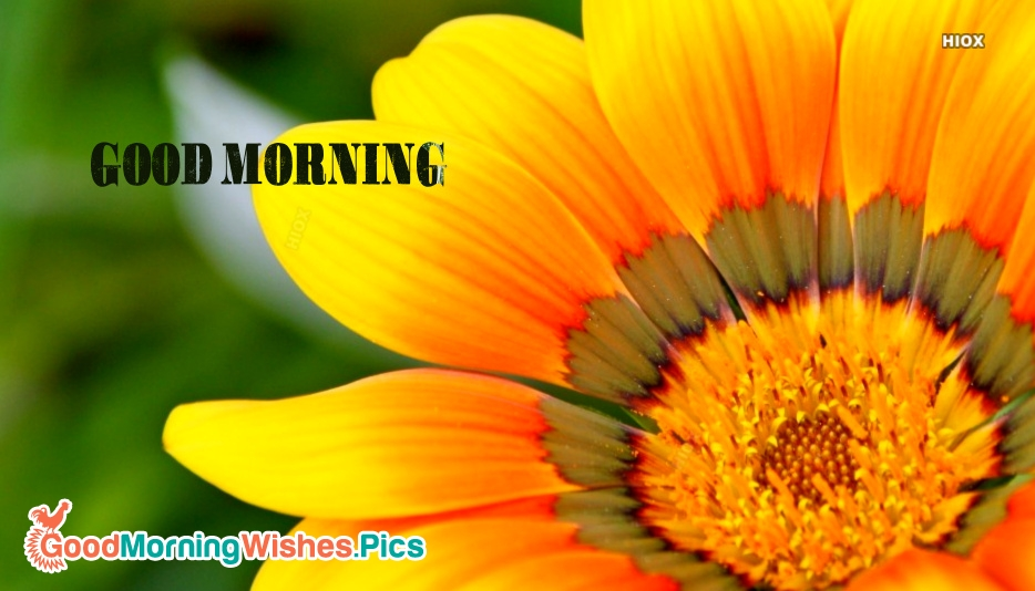 Good Morning Quotes And Sayings For Someone Special: Cute Good Morning Images For Someone Special
