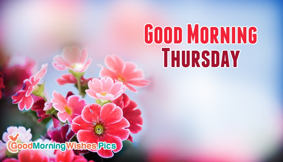 Good Morning Thursday Image : Good morning thursday goodmorningwishes pics