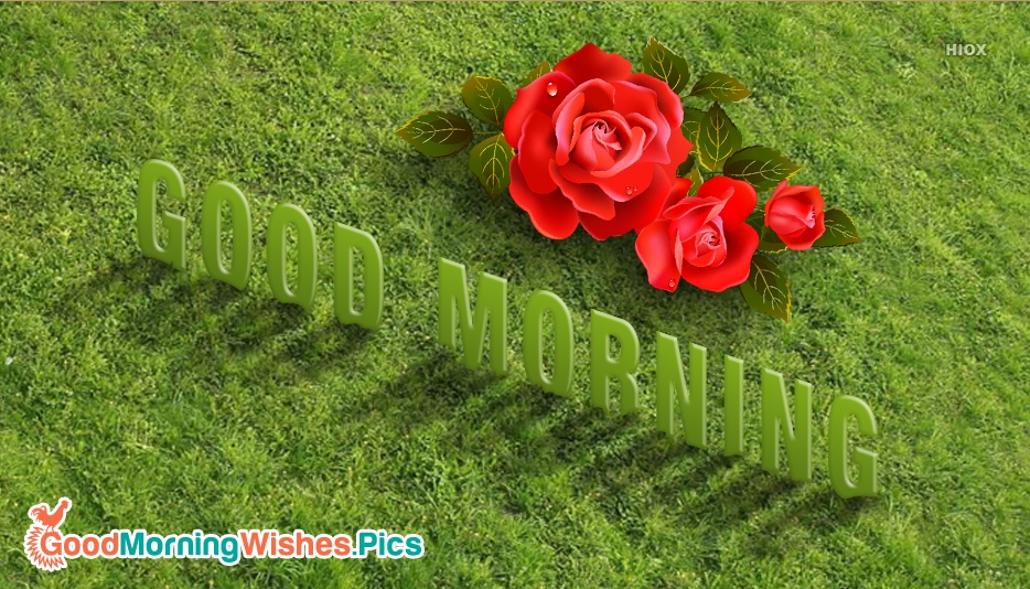 Good Morning Wallpaper Red Rose