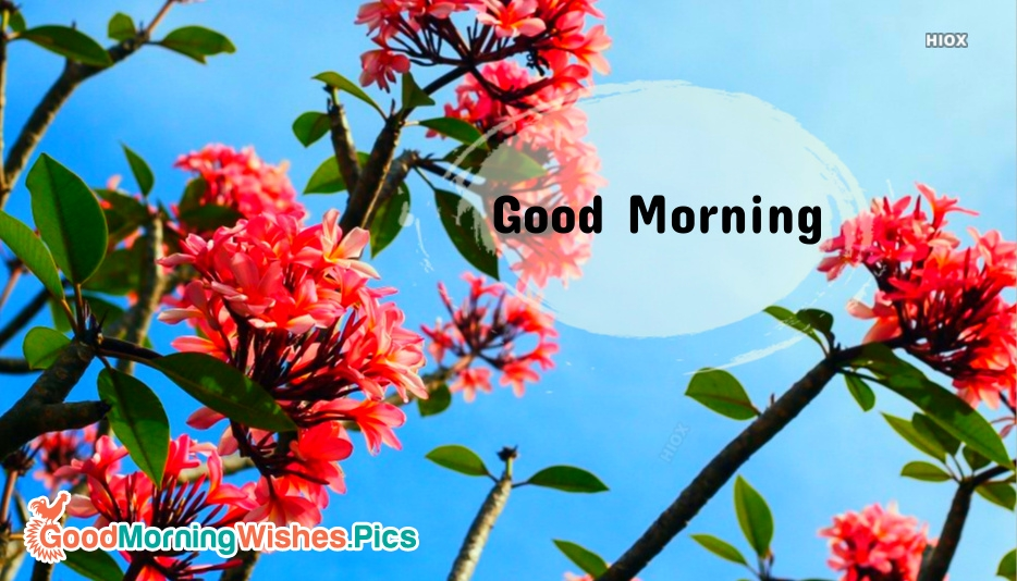 Good Morning Wishes Card