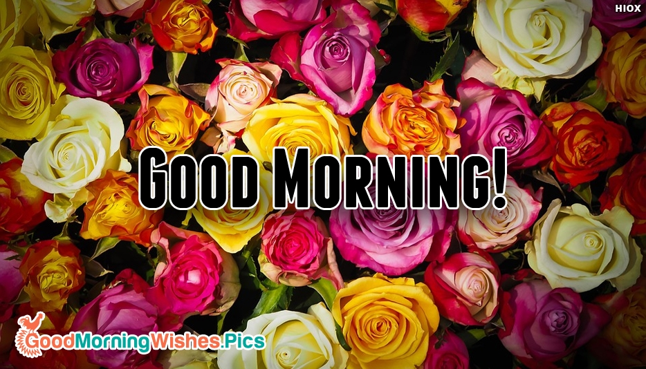 Good Morning With Beautiful Roses - Good Morning Wishes Roses