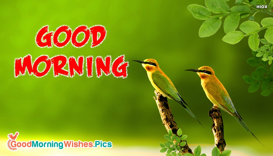 Good Morning With Birds - Good Morning Nature Images