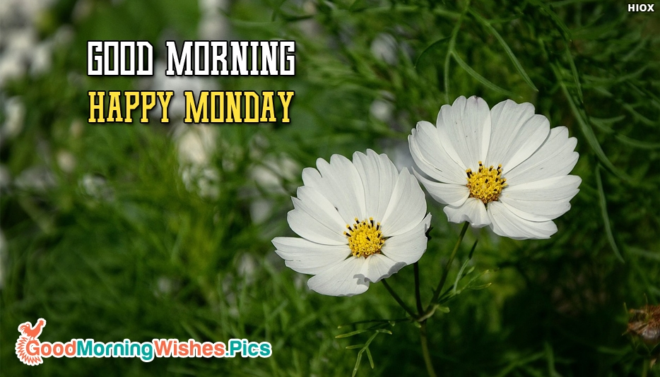 Good Morning With Happy Monday - Good Morning Images for Monday