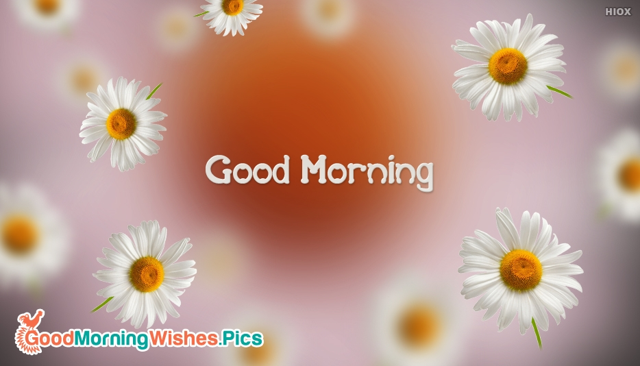 Good Morning Images for Flowers
