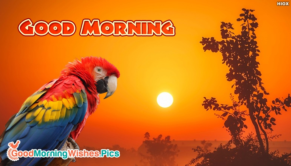 Good Morning With Parrot - Good Morning Images with Parrot