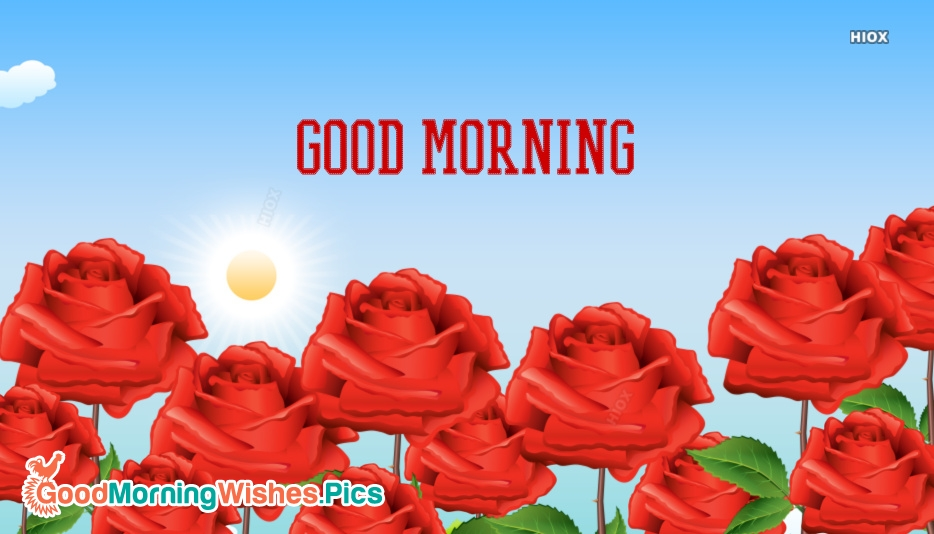 Good Morning Images for Rose