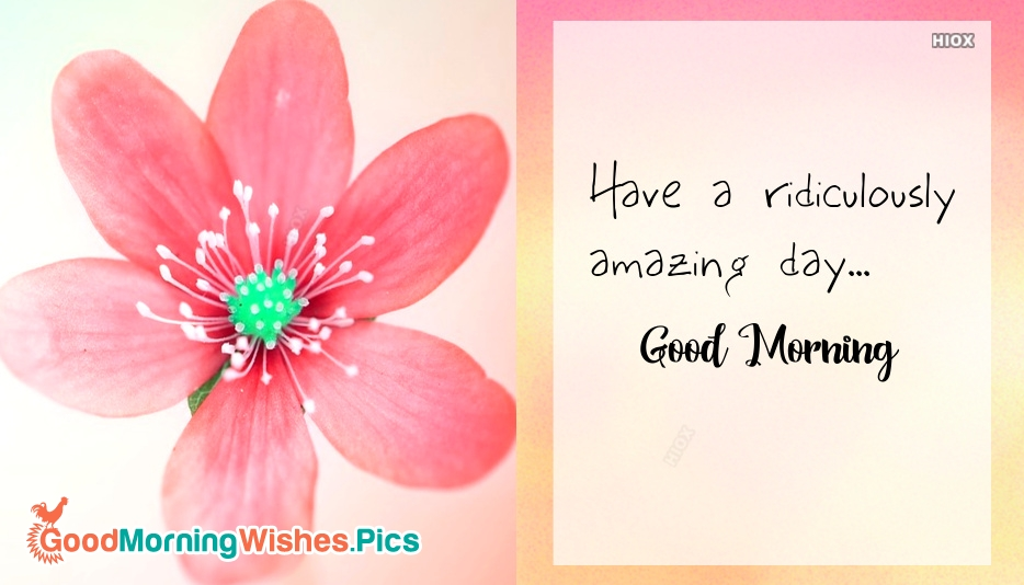 Have A Ridiculously Amazing Day