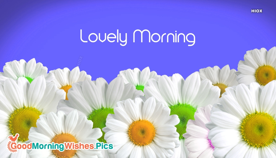 Lovely Morning Pic
