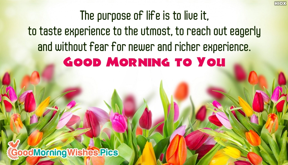 The Purpose Of Life is To Live It, To Taste Experience To The Utmost, To Reach Out Eagerly and Without Fear For Newer and Richer Experience. Good Morning To You - Good Morning Images for Wallpaper
