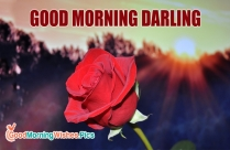 Good Morning Darling Images for Whatsapp