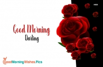 good morning msg with red rose