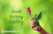 Good Morning Darling With Rose