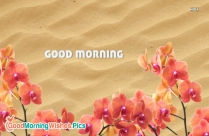 Good Morning Flowers Sand