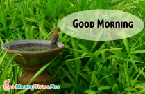 Good Morning Mist Images