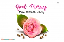 Good Morning Beautiful Flower Background