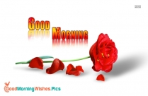 good morning with red rose hd