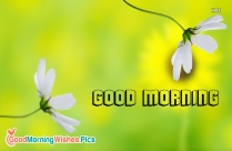 Happy Happy Morning Images