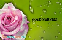 good morning images with pink roses