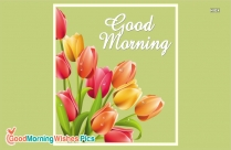 Good Morning With Tulips