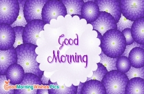 Good Morning With Violet Flowers