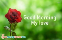Goodmorning My Love Image With Rose