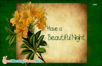 Have A Beautiful Night