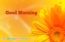 Good Morning Flower Images for Whatsapp